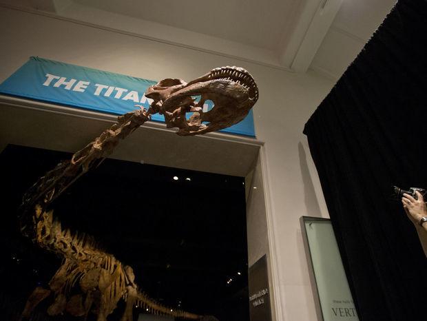 Novým lákadlom Amerického prírodovedného múzea v New Yorku je čerstvý prírastok - kostra nedávno objaveného dinosaura, ktorému odborníci ešte ani nestačili dať meno.