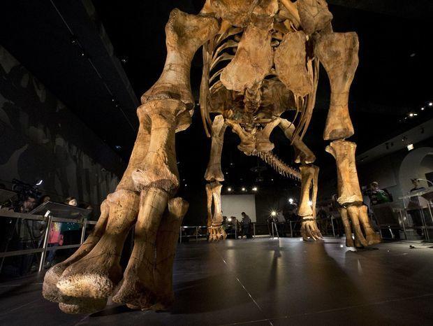 New York, paleontológia, prírodovedné múzeum, kostra dinosaurus
