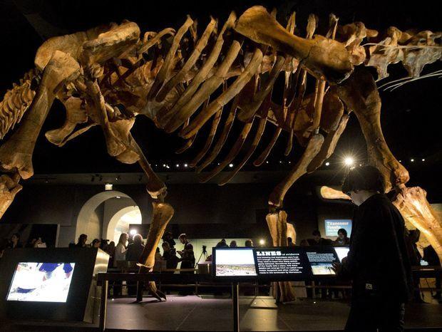 Nový dinosaurus však svojou veľkosťou všetky exponáty prekonáva.