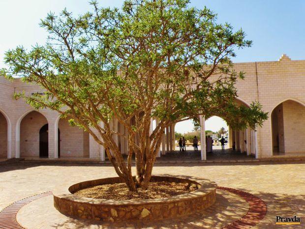 Nádvorie Múzea krajiny kadidla (Dafár v južnom Ománe) s kadidlovníkom v popredí.