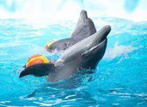 delfín, cirkus