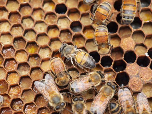 včely, úľ,
