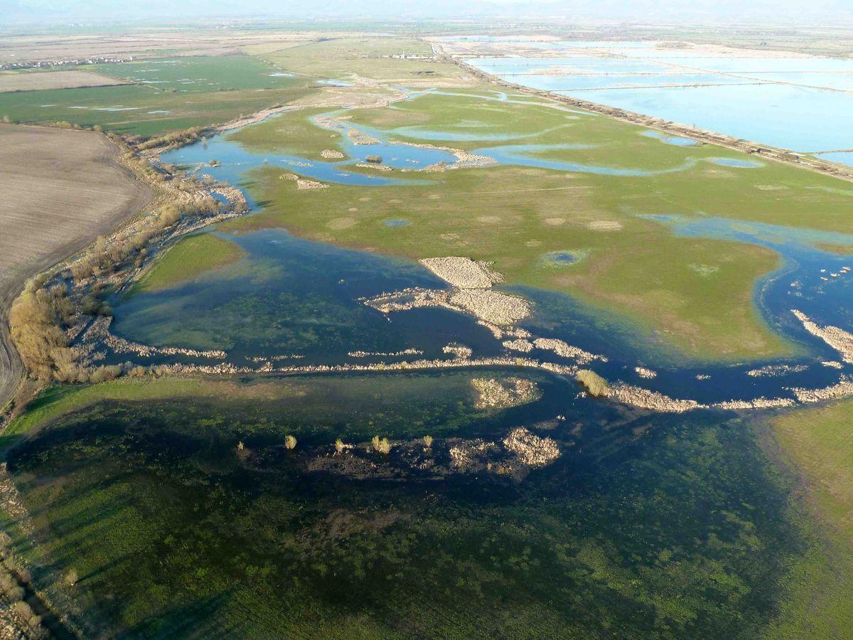 Senianske rybníky sú útočiskom pre vzácne druhy vtákov.