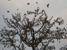 strom, vtáky, konáre, India,