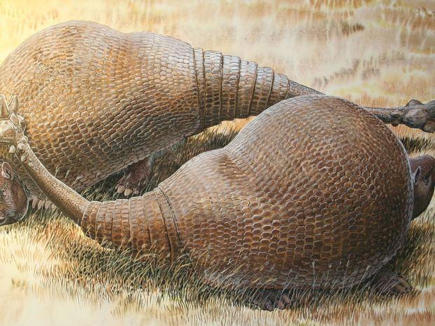 glyptodonty, predchodca pásavcov