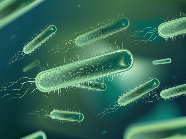 baktéria, bičík, Pseudomonas gregormendelii, vírus, choroba