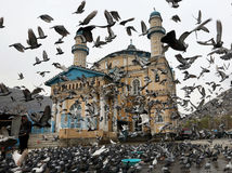 Afganistan, vtáky, chrám, holuby,