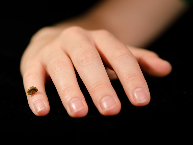 ruka, denisovan, prst