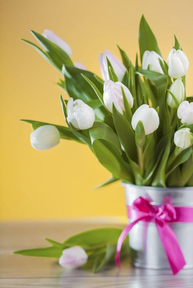 Hoci biela farba  nepatrí k tulipánom automaticky, ak  ju však milujete, môžete celú kyticu umiestniť do kovového vedierka, ktoré ešte ozdobíte mašľou vo farbe magenta. Veľmi výrazná dekorácia stola, čo poviete?