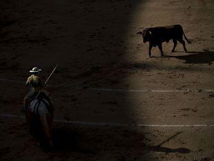 býk, býčie zápasy, toreador,