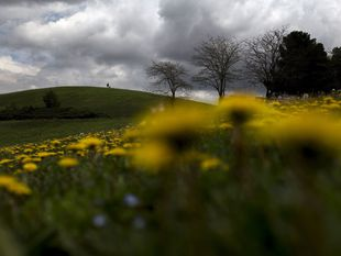 lúka, leto, teplo, tráva, kvety, stroy, turista, počasie, púpavy, mraky,