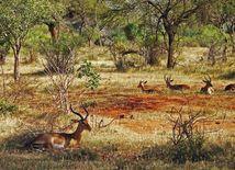 antilopy, Afrika, divé zvieratá, prírodná rezervácia
