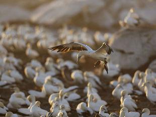 vtáky, mláďatá, južná afrika