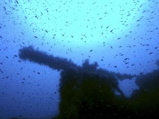 more, voda, ryby, oceán