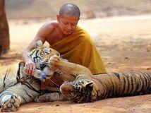 tigre, budhistický chrám, Thajsko, tiger, mních, voda, fľaša, kŕmenie