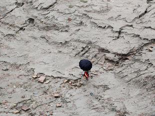 India, počasie, dáždnik, blato