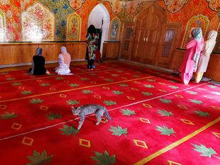 ramadán, moslimovia, islam, mačka, moslimky, modlitba, mešita