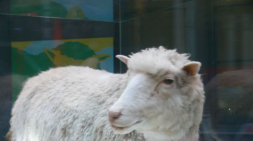 Dolly the sheep museum