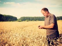 obilie, žatva, farmár, poľnohospodár, poľnohospodársko, pole, úroda,
