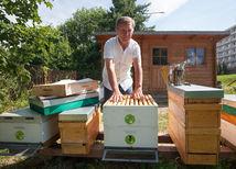 včelár, Filo, včely, včelárstvo