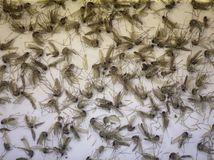 zika, komáre