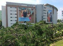 spílené stromy, orezané borovice, ihličnany, reklama