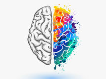 mozog, kôra
