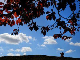 strom, obloha, nebo, mraky, prechádzka, jeseň