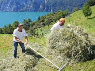 Švajčiarsko, jazero, hory, vrchy, hrabanie, tráva, seno, Alpy