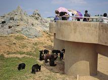 KĽDR, Severná Kórea, zoo, medvede,