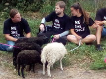 bonaparte, protest, ovca