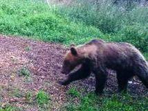 Biele Karpaty, les, medved, hubár, červený kamen