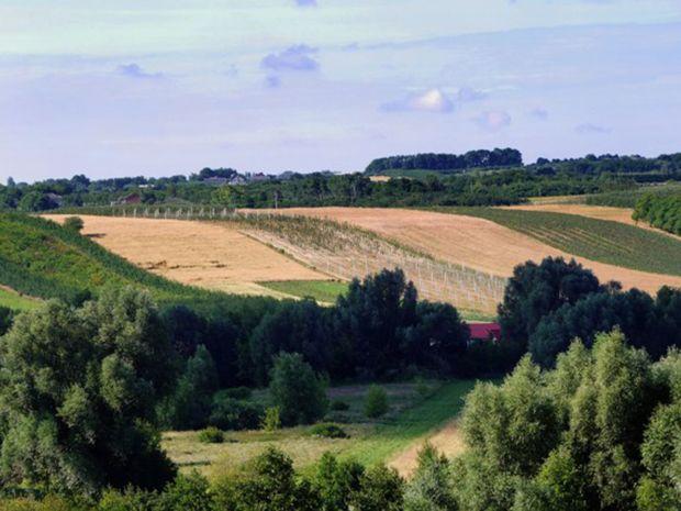 Obrázok Víno zo severu. Ochutnali ste už niekedy poľské?