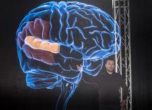 noc výskumníkov, mozog
