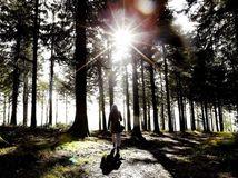 les, stromy, príroda, prechádzka, cestovanie, turistika, slnko, turistka