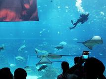akvárium, Čína