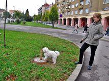 žena, pes, park, mesto, Nová Dubnica