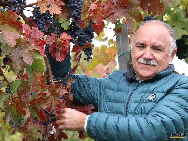 Obrázok Víno je príroda sama s kusom človečiny