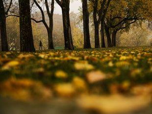 jeseň, listy, park, stromy, príroda,