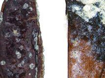 fosílie, chrobák