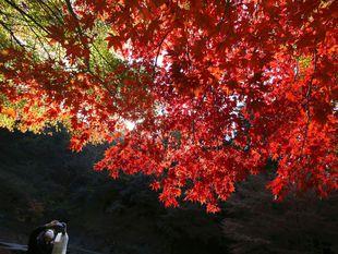 jeseň, strom, park, listy