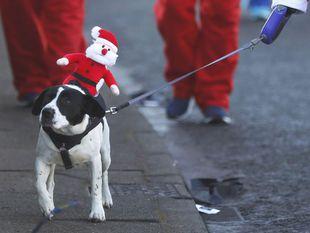 pes, Santa Claus, Mikuláš