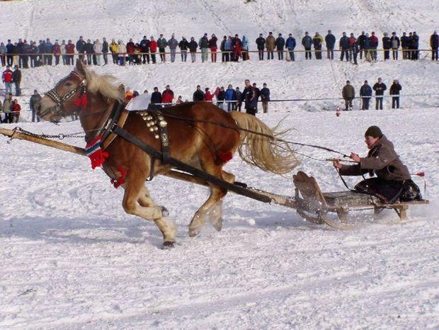 """Prvá disciplína preverí zručnosť furmana a poslušnosť jeho dvoch koní, ktoré s drevom prechádzajú pomedzi prekážky na čas. Kráľovskou disciplínou je však """"ťažký ťah"""", z ktorého vzíde ten najmocnejší pár koní."""