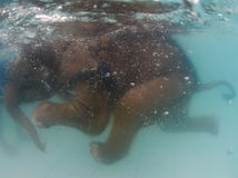 Slon, plávanie, Thajsko
