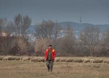 Bača aj v zime stráži ovce na salaši v Bratislave