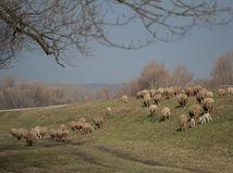 Jano Chalupka, salaš, ovce, bača