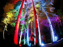 les, stromy, svetlá, farby, Nemecko, Frankfurt