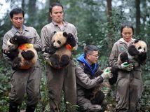 pandy, lunárny nový rok, Čína