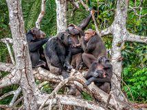 šimpanzy, opice, voda,