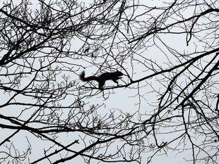 veverička, strom, konáre